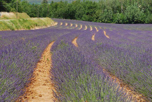 Ruta por la provenza y sus campos de lavanda - La provenza italiana ...