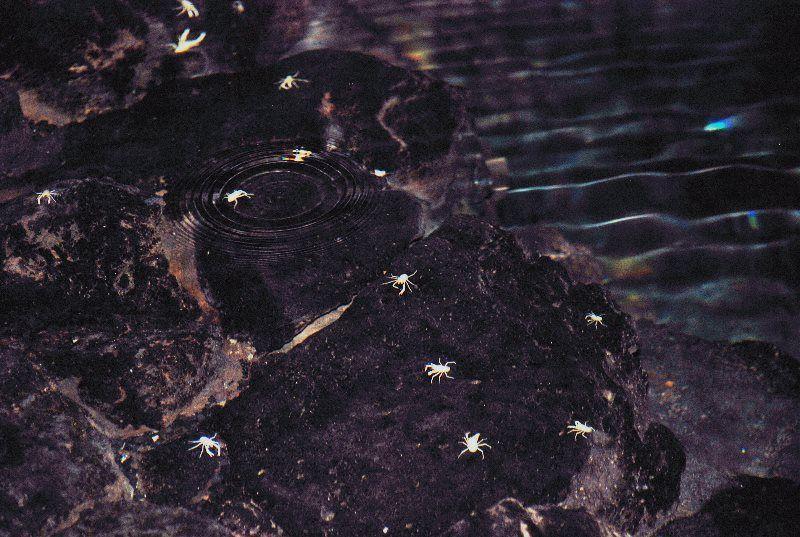 Los cangrejos ciegos