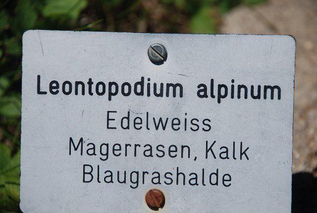 Cartel del Edelweiss