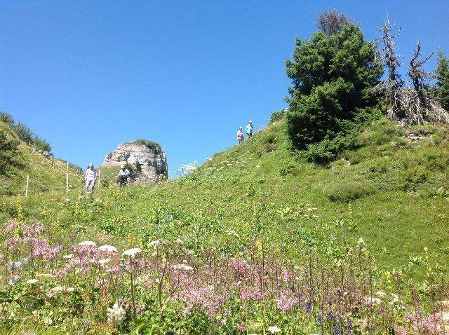 Sendero del jardín alpino