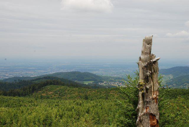 Schwarzwald Straße
