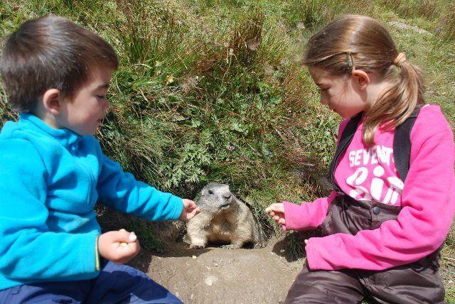 Los pequeños se lo pasan en grande alimentando marmotas