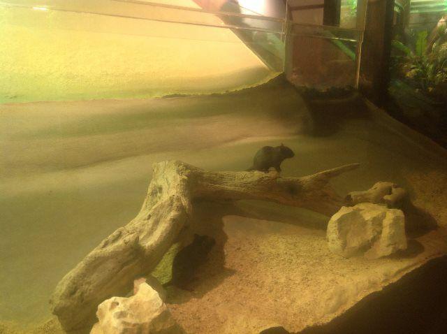 Descubriendo los hábitats naturales de Toca toca