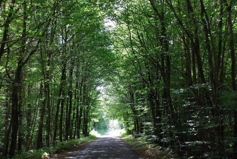 Bosque de Paimpont