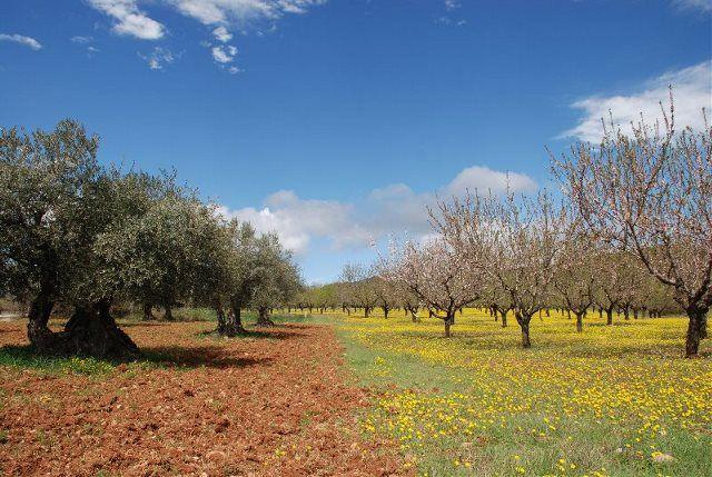 Primavera en el Parque Natural de la Sierra y Cañones de Guara