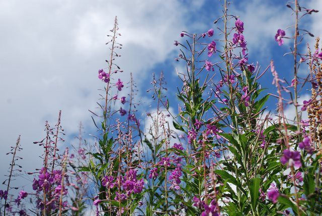 Sendero de las flores