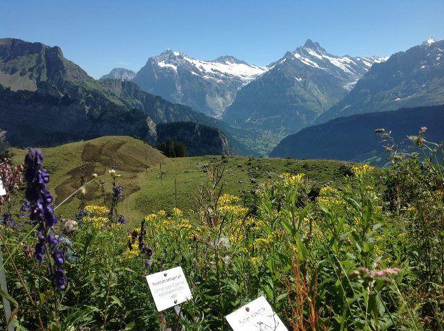 Flores de los Alpes