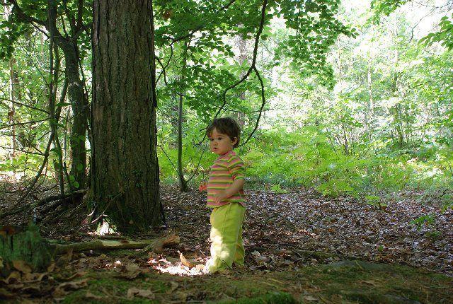 Duendecillos en el bosque de Broceliande