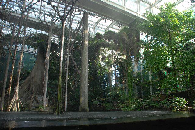 El bosque inundado del museo de la ciencia de Barcelona