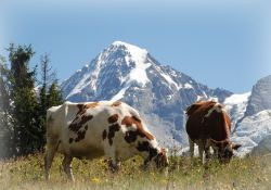 paisajes del Berner Oberland en Suiza