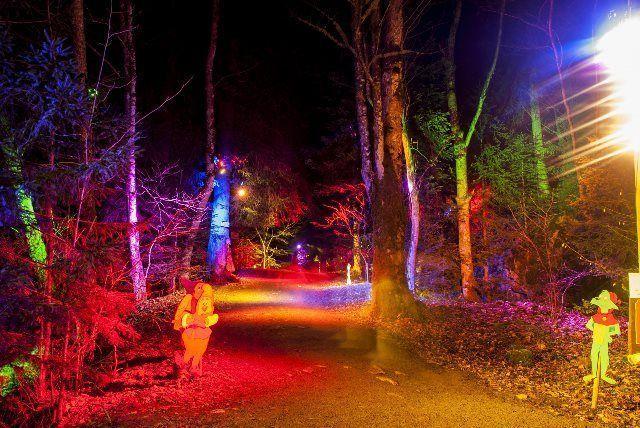 El bosque que viene de Hinterzarten