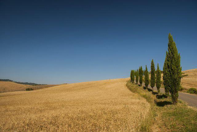 Campos de trigo y cipreses, Toscana