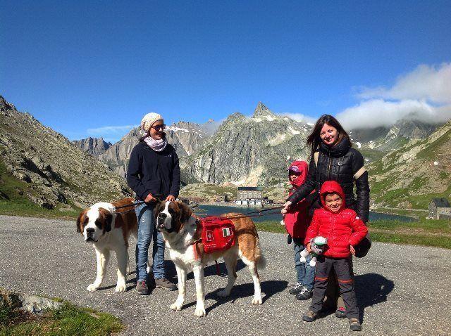 Excursión con los San Bernardos