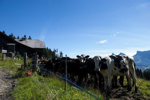 Granjas y vacas de Gruyères
